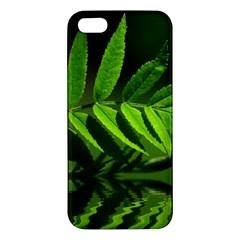 Leaf Iphone 5s Premium Hardshell Case by Siebenhuehner