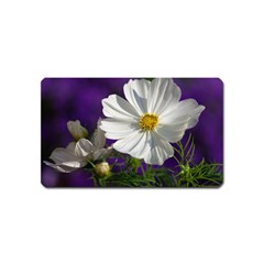 Cosmea   Magnet (name Card) by Siebenhuehner