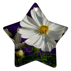 Cosmea   Star Ornament (two Sides) by Siebenhuehner