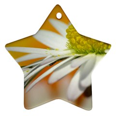 Daisy With Drops Star Ornament by Siebenhuehner
