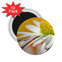 Daisy With Drops 2 25  Button Magnet (10 Pack) by Siebenhuehner
