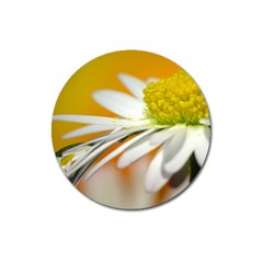 Daisy With Drops Magnet 3  (round) by Siebenhuehner