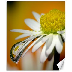 Daisy With Drops Canvas 20  X 24  (unframed)
