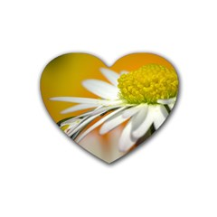 Daisy With Drops Drink Coasters 4 Pack (heart)  by Siebenhuehner