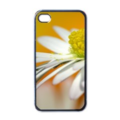 Daisy With Drops Apple Iphone 4 Case (black) by Siebenhuehner