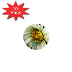 Daisy 1  Mini Button Magnet (10 Pack) by Siebenhuehner
