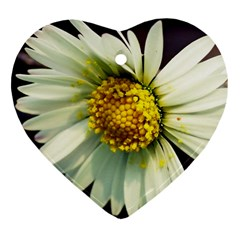 Daisy Heart Ornament (two Sides) by Siebenhuehner
