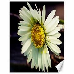 Daisy Canvas 12  X 16  (unframed) by Siebenhuehner