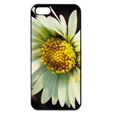 Daisy Apple Iphone 5 Seamless Case (black) by Siebenhuehner