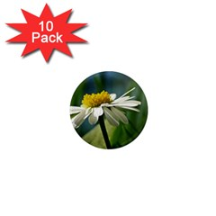 Daisy 1  Mini Button Magnet (10 Pack) by Siebenhuehner