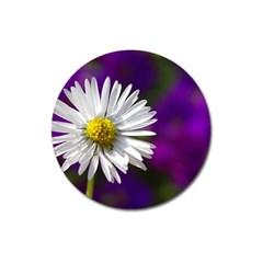 Daisy Magnet 3  (round) by Siebenhuehner