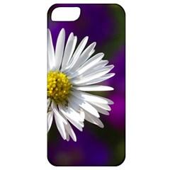 Daisy Apple Iphone 5 Classic Hardshell Case by Siebenhuehner