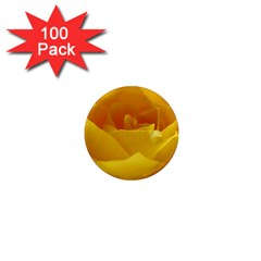 Yellow Rose 1  Mini Button Magnet (100 Pack) by Siebenhuehner