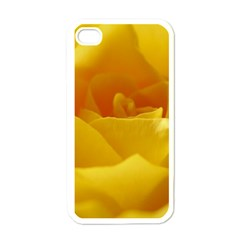 Yellow Rose Apple Iphone 4 Case (white) by Siebenhuehner