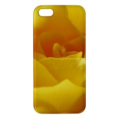 Yellow Rose Iphone 5 Premium Hardshell Case by Siebenhuehner