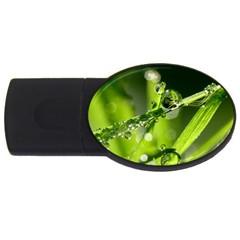 Waterdrops 4gb Usb Flash Drive (oval) by Siebenhuehner