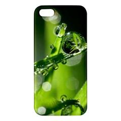 Waterdrops Iphone 5s Premium Hardshell Case by Siebenhuehner