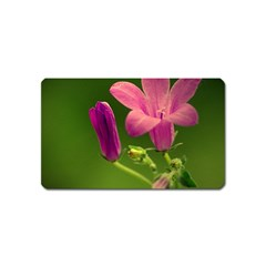 Campanula Close Up Magnet (name Card) by Siebenhuehner