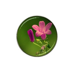 Campanula Close Up Golf Ball Marker 10 Pack (for Hat Clip) by Siebenhuehner