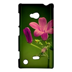 Campanula Close Up Nokia Lumia 720 Hardshell Case by Siebenhuehner