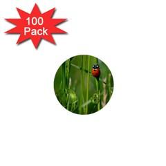 Ladybird 1  Mini Button (100 Pack) by Siebenhuehner