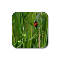 Ladybird Drink Coasters 4 Pack (square) by Siebenhuehner
