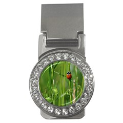Ladybird Money Clip (cz) by Siebenhuehner