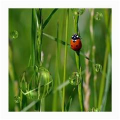 Ladybird Glasses Cloth (medium, Two Sided) by Siebenhuehner