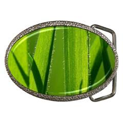 Grass Belt Buckle (oval) by Siebenhuehner