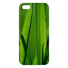 Grass Iphone 5s Premium Hardshell Case by Siebenhuehner