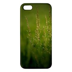 Grass Iphone 5 Premium Hardshell Case by Siebenhuehner
