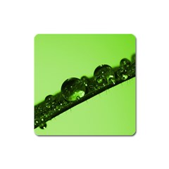 Green Drops Magnet (square) by Siebenhuehner