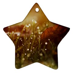 Waterdrops Star Ornament by Siebenhuehner