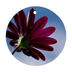 Daisy Round Ornament by Siebenhuehner