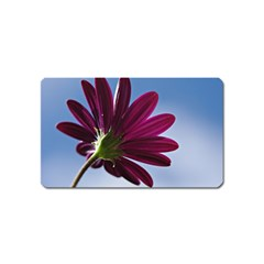 Daisy Magnet (name Card) by Siebenhuehner