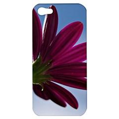 Daisy Apple Iphone 5 Hardshell Case by Siebenhuehner