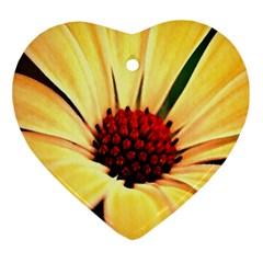 Osterspermum Heart Ornament
