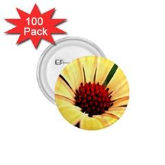Osterspermum 1 75  Button (100 Pack) by Siebenhuehner