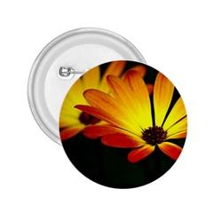 Osterspermum 2 25  Button by Siebenhuehner