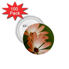 Osterspermum 1 75  Button (100 Pack) by Siebenhuehner