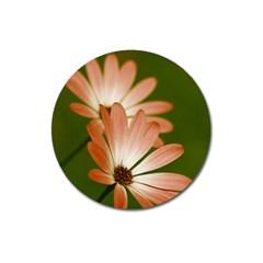 Osterspermum Magnet 3  (round) by Siebenhuehner