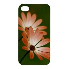 Osterspermum Apple Iphone 4/4s Premium Hardshell Case by Siebenhuehner