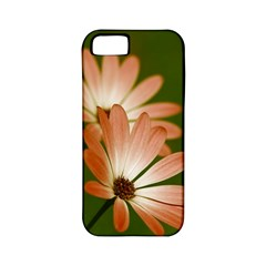 Osterspermum Apple Iphone 5 Classic Hardshell Case (pc+silicone) by Siebenhuehner