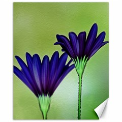 Osterspermum Canvas 11  x 14  (Unframed)