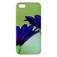 Osterspermum Iphone 5 Premium Hardshell Case by Siebenhuehner