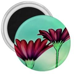 Osterspermum 3  Button Magnet by Siebenhuehner