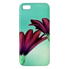 Osterspermum Iphone 5s Premium Hardshell Case by Siebenhuehner