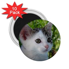 Young Cat 2 25  Button Magnet (10 Pack) by Siebenhuehner