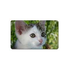 Young Cat Magnet (name Card) by Siebenhuehner