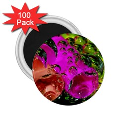 Tubules 2 25  Button Magnet (100 Pack) by Siebenhuehner